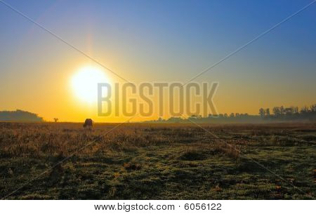 Lonely Cow At Dawn