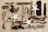 Starfish and driftwood abstract design over old oak background. poster
