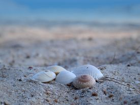 Group Of Sea Shells On The Sandy Beach