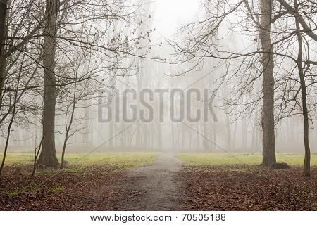 cold morning fog on foliage on meadow among the trees of autumn creepy forest poster