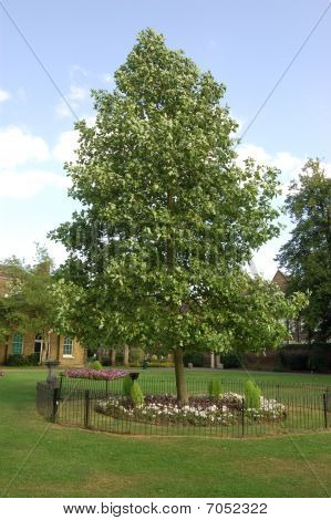 Princess Diana memorial tree
