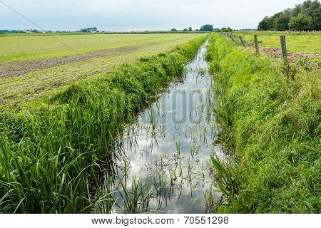 Dutch Polder Landscape In The Summer Season