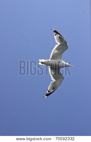 Seagul On The Sky