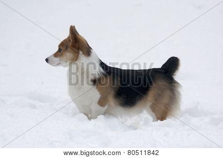 dig in snow