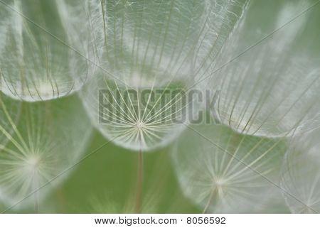 Makro-Blume