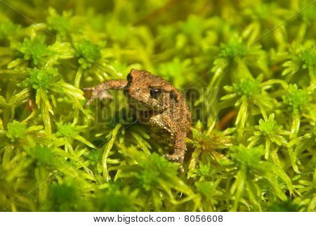 Young Toad Look