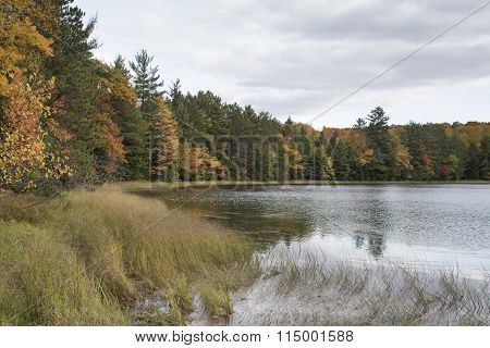 Sedges By The Lake