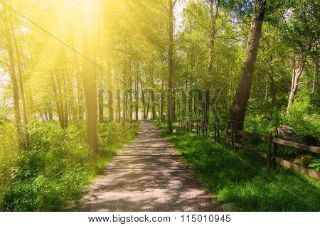 Sunny park with trail