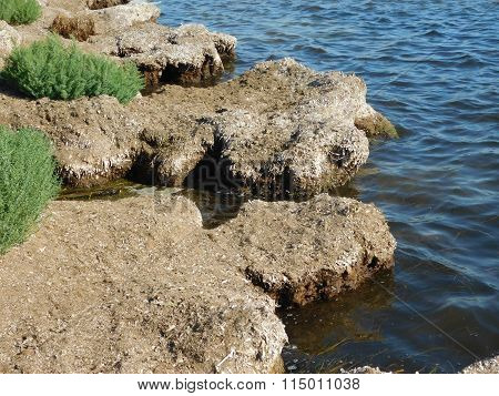 outdoor algae in the sea beach during the day