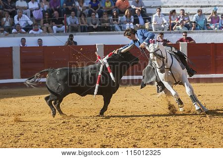 Spanish bullfighter on horseback Pablo Hermoso de Mendoza bullfighting on horseback playing the head