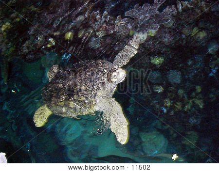 Turtle Boston Aquarium