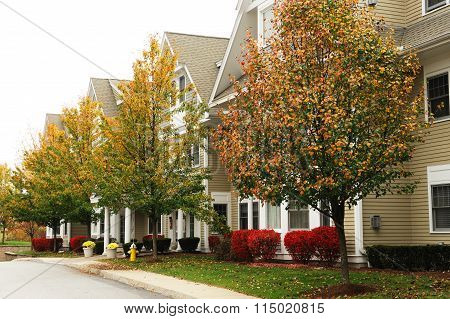 apartment buildings and autumn tree