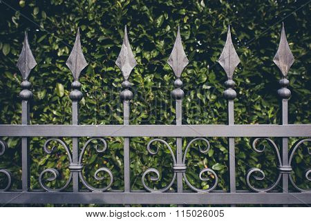 Iron Fence With Green Leaves
