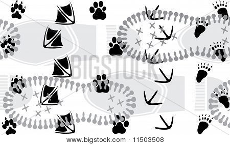 Animal traces trampled by the human one