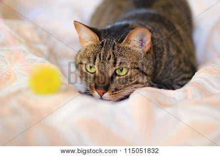 cat in ambush