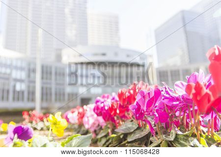 Red Flower Foreground With Goverment Building In Japan Background
