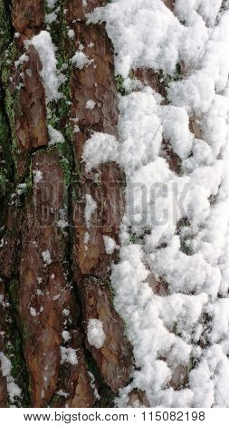 Tree bark covered by snow