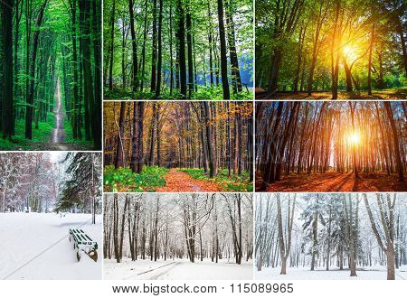 collage forest season backgrounds. Winter, Spring, Summer, Autumn. Collection