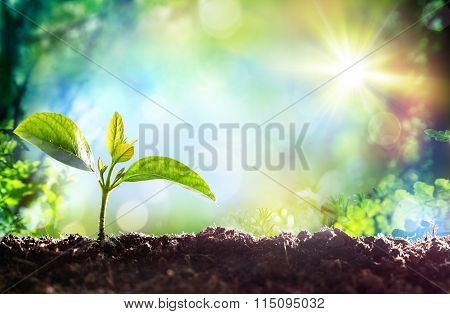 Growing Sprout - Beginning Of A New Life poster