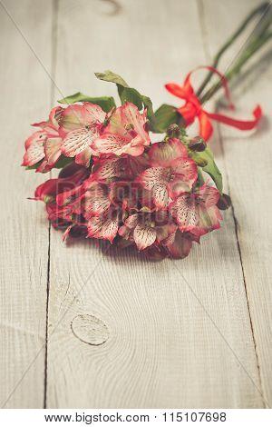 Pink alstromeria flowers