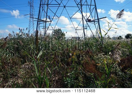 Plants Under Electricity Tower