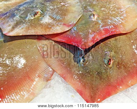 Stack Of Sting Ray On Ice At The Market