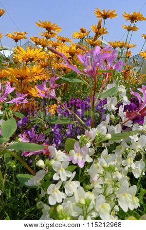 Mixed Summer Anual Flowers