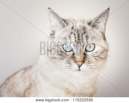 Cat's portrait