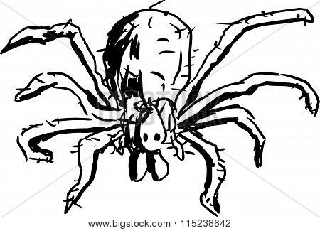 Hobo Spider Outline