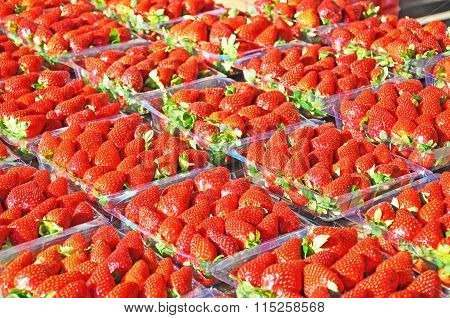 Fresh Strawberries Packed For Sale