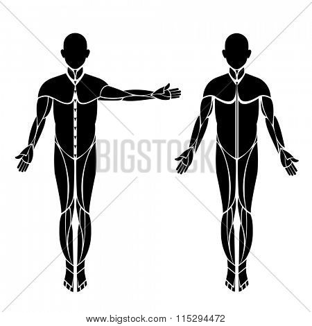 Human body form male two poses