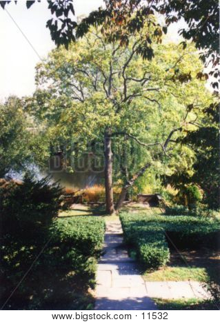 Concord Tree