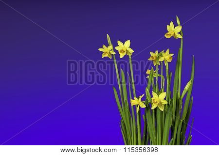 Spring and Easter flowers