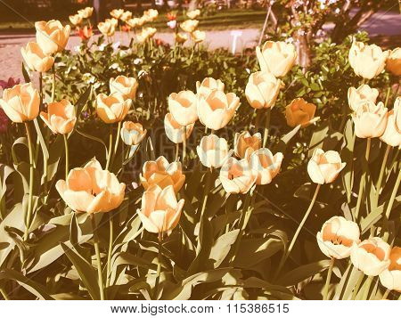 Retro Looking Tulips