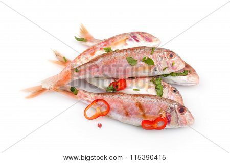 Raw Red Mullet Fish
