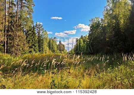Summer forest in sunny weather