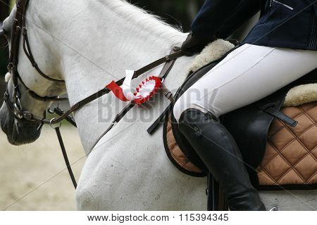 Beautiful Award-winning Horse Galloping In The Arena