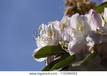 plant, flower, bloom, blossom, flowering, red, seed, nature, king, being, feather, environment, ambi
