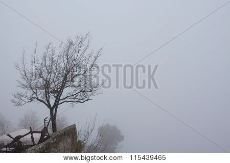 Lone Tree On Top Of A Mountain.