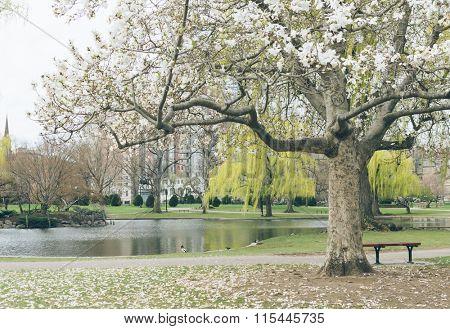 spring in yale university, USA.