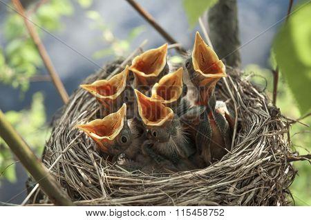 Little Children Birds 9