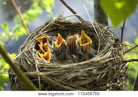Little Children Birds 10