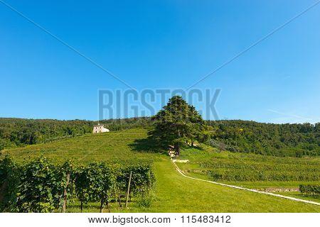 Hills With Vineyards Near Verona - Italy