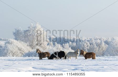 Winter snowy landscape and four ponies