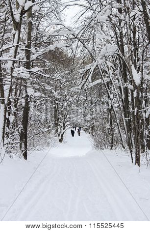 Ski In The Winter Forest