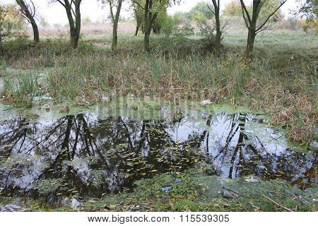 Small puddle in the middle of the woods, polluted and full of garbage