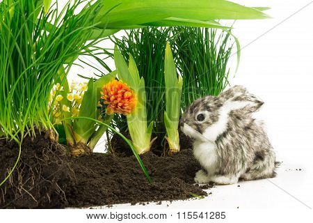 Cute Rabbit, Pet On The Soil With Orange Flower And Green Plants