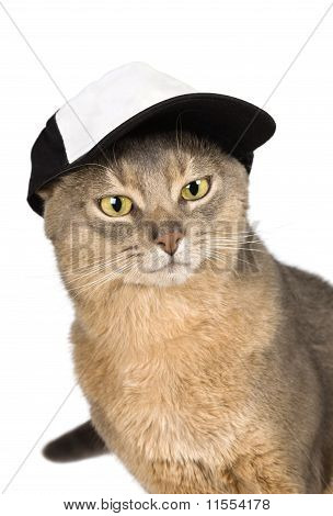 Abyssinian cat in baseball cap