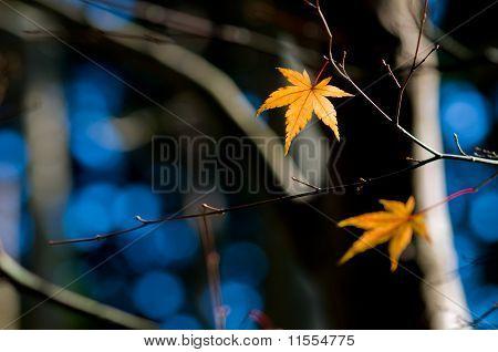 Orange Leaf On A Tree In Winter Setting