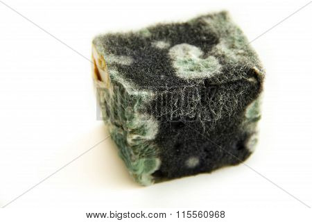 Mold On Cheese. Spoiled Junk Food. Dairy Product.